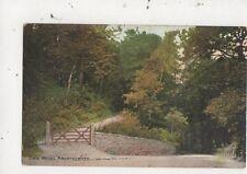 Cwm Woods Aberystwyth 1907 Postcard 980a