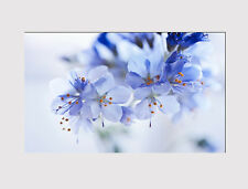 418 X LARGE CANVAS 18''x32'' WALL BEAUTIFUL BLUE WHITE FLOWERS PRINT PICTURE
