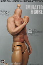 1/6 Scale Strong Muscular Figure Body W Seamless Arms for Collection
