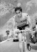 Eddy Merckx Tour de France Cycling Legend 10x8 Photo #2
