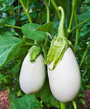 Eggplant Seeds - WHITE STAR - F1 Hybrid - Solanum Melongena - 25 Seeds