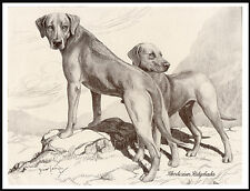 RHODESIAN RIDGEBACK DOGS GREAT VINTAGE STYLE DOG PRINT POSTER