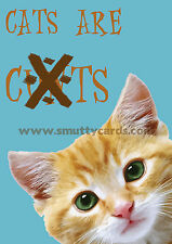 Cats Are C##ts - Very Rude Cat Greetings Card ~ Potty Mouth Cards - PM-WL1513