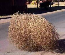 Large Country Tumbleweeds