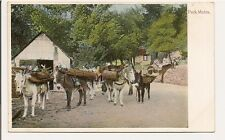 "Vintage California Postcard ""Pack Mules""  hauling timber to supply camps?"