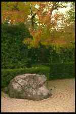 334052 Kyoto temple Garden Rock With Yellow Maple A4 Photo Print