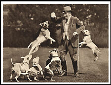 STAFFORDSHIRE BULL TERRIER TOM WALL AND HIS DOGS LOVELY IMAGE DOG PRINT POSTER