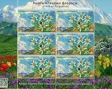 Kyrgyzstan KEP 2016 MNH Flora of Kyrgyzstan Edelweiss 6v M/S Flowers Stamps