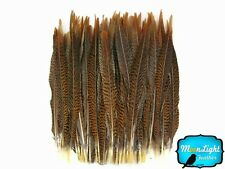 """Pheasant Feathers 50 16-18"""" Natural Golden Pheasant Tail Feathers"""