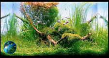 Weeping Moss- Live Plant Fish Aquascape Green Aquarium
