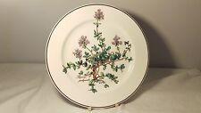 EXCELLENT! Villeroy & Boch Botanica Salad Plate Thymus Pulegioides No Root