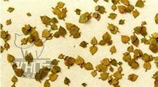 Reality in Scale 1:32 1:35 Lime leaves (c. 300pcs.) - Autumn L3103*