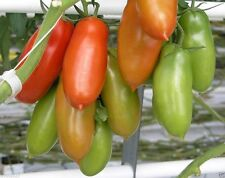 San Marzano tomato, Known as the greatest 'sauce' tomato in the world- 50 Seeds!