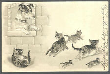 Cats, A Band of Little Cats Scared from a Big Dog, Funny Old Embossed Postcard