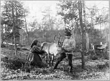 Photo. ca 1894. Norway.  Milking Reindeer