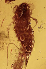 Nice Looking SILVERFISH Moment of Escaping Inclusion BALTIC AMBER + HQ Picture