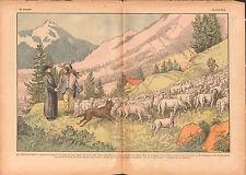 Transhumance bétail Troupeaux de Moutons Berger Chien Alpes 1937 ILLUSTRATION
