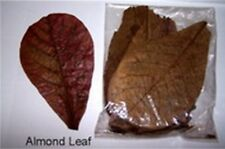 Almond Leave Catappa 100 g Gr-A+++ Katapang Betta Fish Splendens for Shrimp