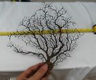 One(1) 8-10'' Natural Black Sea Fan Willow Sea Tree Wall Decor Christmas Tree