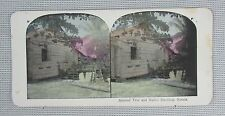 Stereoview - Almond Tree and Native Dwelling, Samoa