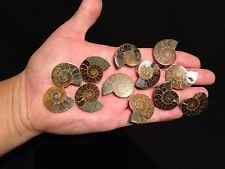 1x Superbe paire d'ammonite sciée fossile de Madagascar!!pair ammonite fossil!!