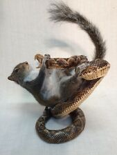 Taxidermy Gray Squirrel  Fighting Rattlesnake!