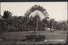 South-East Asia Postcard - Traveling Tree, Malaya   MB1041