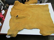 """MOOSE HIDE NATIVE AMERICAN DARK COLOR HOME TANNED HIDE 34"""" BY 41"""" SMALL, SEWING"""