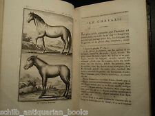 1797 Buffon Natural Science HORSES Animals PLATES Chevaux Donkeys Veterinary