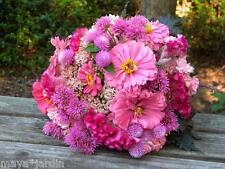 100 Graines Zinnia Fleurs en Mélange Rose (Zinnia) Pink mix Samen Semillas Seeds