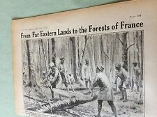 m4-9 ephemera 1918 picture ww1 indian labour corps forestry corps