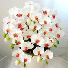 200PCS White Phalaenopsis Seeds Butterfly Orchid Potted plant Flowers Bonsai