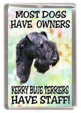 "Kerry Blue Terrier Dog Fridge Magnet ""... Kerry Blue Terriers Have Staff"""