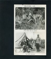 RPPC Rifle Hunting Dog Bird Duck in DALHOUSIE NB photo RP postcard New Brunswick