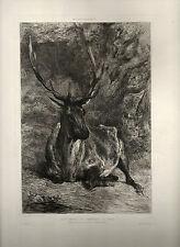 gravure eau-forte de et par Lançon, Cerf , études d'animaux , l'Art