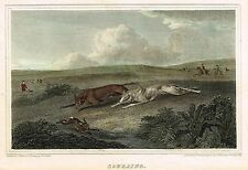 """Sporting Print - Scott's """"COURSING"""" (Greyhounds) - Hand-Colored Engraving - 1817"""