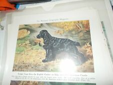 Walter A. Weber English Cocker Spaniel bookplate 1947 National Geographic Mag