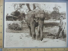 Rare Antique Original VTG 1914 Gunda Indian Elephant Photogravure Art Print