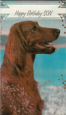 Vintage 1970's Irish Setter Happy Birthday Son Greeting Card