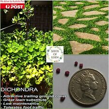 50 DICHONDRA SEEDS(Dichondra repens); Great & attractive lawn substitute