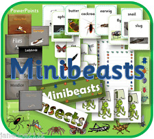 MINIBEASTS INSECTS EYFS KS1 topic, Cards display, IWB, teaching resources on CD