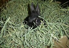 Timothy Grass Seed - Bulk Grass - Small Pet Treat - Easy to Grow!! - 1 lb. Seeds