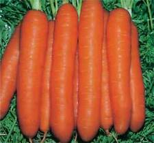 CARROT - TOUCHON - 5 GRAM ~ 4000 FINEST SEEDS