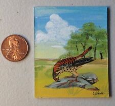 Original Miniature Painting of a Curious Sparrow-Hawk, Collectible Wall Art