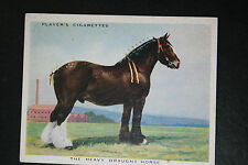 Heavy Draught Horse  1930's Original Large Vintage Card  VGC