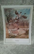 Ducks Unlimited Print  PINTAIL MAJESTY  by Harold Roe