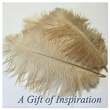 3 Perfect 20-25cm Gorgeous Tan/Beige OSTRICH feathers craft/millinery
