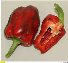 10 Seeds HEI-FUN- Capsicum annuum-Sweet Pepper- Spicality pepper From China