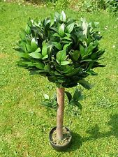 Artificial Plants - 1.2m 4ft Buxus Bay Tree - Indoor Office House Plant Pot