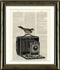 Antique Book page Art Print - Camera and Bird Old Dictionary Page Wall Art